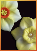 Polymer clay daffodil focal beads